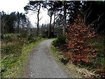 H5776 : Pathway, Altdrumman by Kenneth  Allen