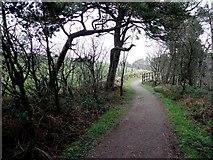 H5776 : Path, Altdrumman by Kenneth  Allen