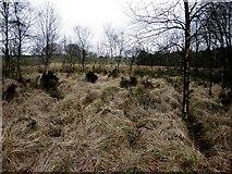 H5776 : Rough ground, Altdrumman by Kenneth  Allen