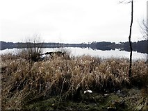 H5776 : Withered grasses, Loughmacrory Lough by Kenneth  Allen
