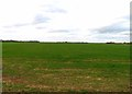 TL1644 : Fields north of Hill Lane by Andrew Tatlow