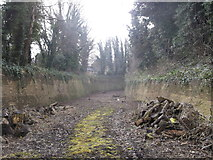 TQ7668 : Lines behind the Lampard Centre, Brompton by David Anstiss