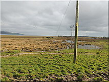 NX4355 : Wetlands at Wigtown by Billy McCrorie