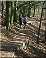 SJ5055 : Walking through Bodnook Wood by Dave Croker