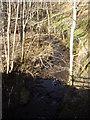 NO7196 : Upstream Bennie Burn by Stanley Howe