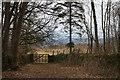 NY5422 : Hackthorpe High plantation by Colin Kinnear