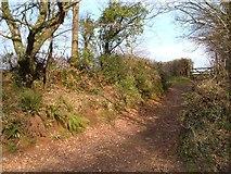 SX8979 : Bridleway near Beggar's Bush by Derek Harper