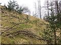 NN2226 : Broken fenceline in the forest above the River Lochy by John Ferguson
