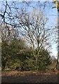 TQ1548 : Woodland with elms, Milton Heath by Stefan Czapski