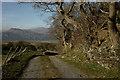 SH5837 : Along the Bridleway, Portmeirion, Gwynedd by Peter Trimming