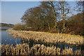 SP0583 : Vegetation at the margins of Edgbaston Pool by Phil Champion
