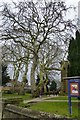 SP4540 : Plane trees in St Mary's churchyard by David Lally