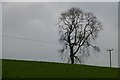 SP4449 : Tree and power lines by David Lally