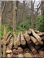 SX9065 : Logs and nesting-box, woodland at Shiphay by Derek Harper