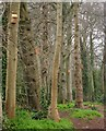 SX9065 : Nesting boxes, woodland at Shiphay by Derek Harper