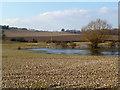 SU5277 : River Pang at Floodcross Cottage 2 by Des Blenkinsopp