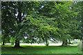 SP3276 : Parkland trees, War Memorial Park, Coventry CV3 by Robin Stott