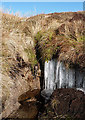 NT1924 : Icicles at Cowie Cleuch by Walter Baxter