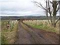 NZ1447 : Windbreak off Newbiggin Lane by Oliver Dixon