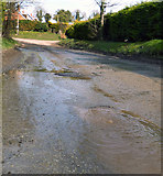 SU3180 : Groundwater Flooding, Upper Lambourn by Des Blenkinsopp