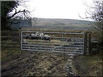 SD6715 : Farmland entrance near Belmont by JThomas