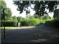 SP3578 : Uncut hedges, Stoke Park, Coventry CV3 by Robin Stott