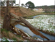 NT6378 : Coastal East Lothian : Splintered! by Richard West