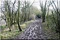 SP4612 : Frogwelldown Lane by Graham Horn