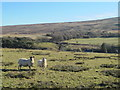 NY6459 : Rough pastures near Low Midgeholme by Mike Quinn