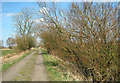 TM4591 : Willow trees beside Marsh Lane, Worlingham by Evelyn Simak
