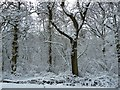 SP7041 : View into snowy Shirehill Wood by Rob Farrow