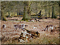 SJ7386 : The Deer Sanctuary at Dunham Massey by David Dixon