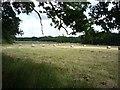 TM3648 : Farmland near Capel Green by DS Pugh