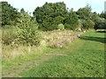 SD5721 : Overgrown ruins by Ann Cook