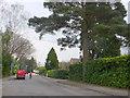 SU0803 : The Avenue West Moors by Nigel Mykura