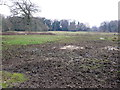 SU0702 : Boggy Fields at West Moors by Nigel Mykura