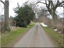 NT5570 : Grand avenue to Linkylea and Linplum houses by James Denham