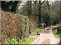 TQ3827 : Man walking his dogs on Wyatts Lane by Stephen Craven