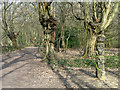 TQ4793 : Hainault Forest - natural and unnatural shapes by Robin Webster