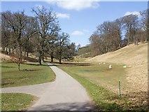 SP4317 : Sheep in Blenheim Park by David P Howard
