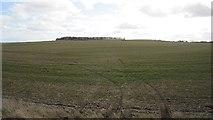 NU0341 : Field beneath Kentstone by Richard Webb
