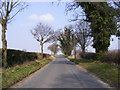 TG0805 : Barnham Broom Road, Carleton Forehoe by Adrian Cable