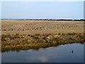 NY0565 : Caerlaverock Wetland Centre by Walter Baxter