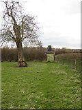SP9623 : Footpath to Stanbridge by Philip Jeffrey