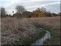 TL4915 : Sawbridgeworth Marsh Nature Reserve by Roger Jones