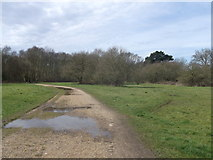 TQ2373 : Path into Wimbledon Common by David Anstiss
