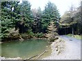 SC3078 : Pond Beside Forest Track by Rude Health