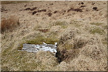 SX6366 : Brown Heath Cist by Guy Wareham