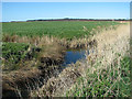 TM4696 : Ditch separating fields in the marshes south of Somerleyton by Evelyn Simak