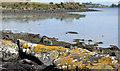J5263 : The loughshore, Mahee Island (2) by Albert Bridge